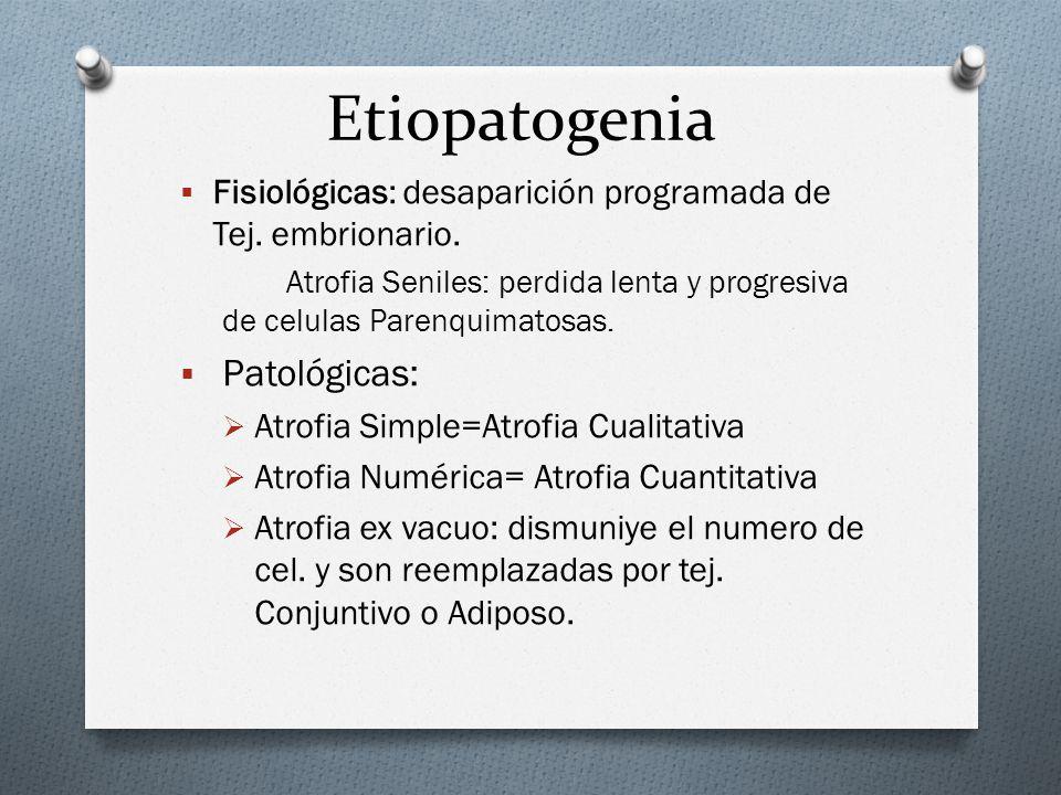Etiopatogenia Fisiológicas: desaparición programada de Tej. embrionario. Atrofia Seniles: perdida lenta y progresiva de celulas Parenquimatosas. Patol