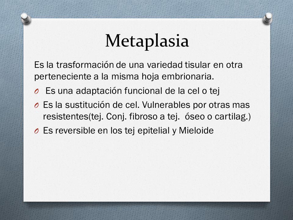 Metaplasia Es la trasformación de una variedad tisular en otra perteneciente a la misma hoja embrionaria. O Es una adaptación funcional de la cel o te