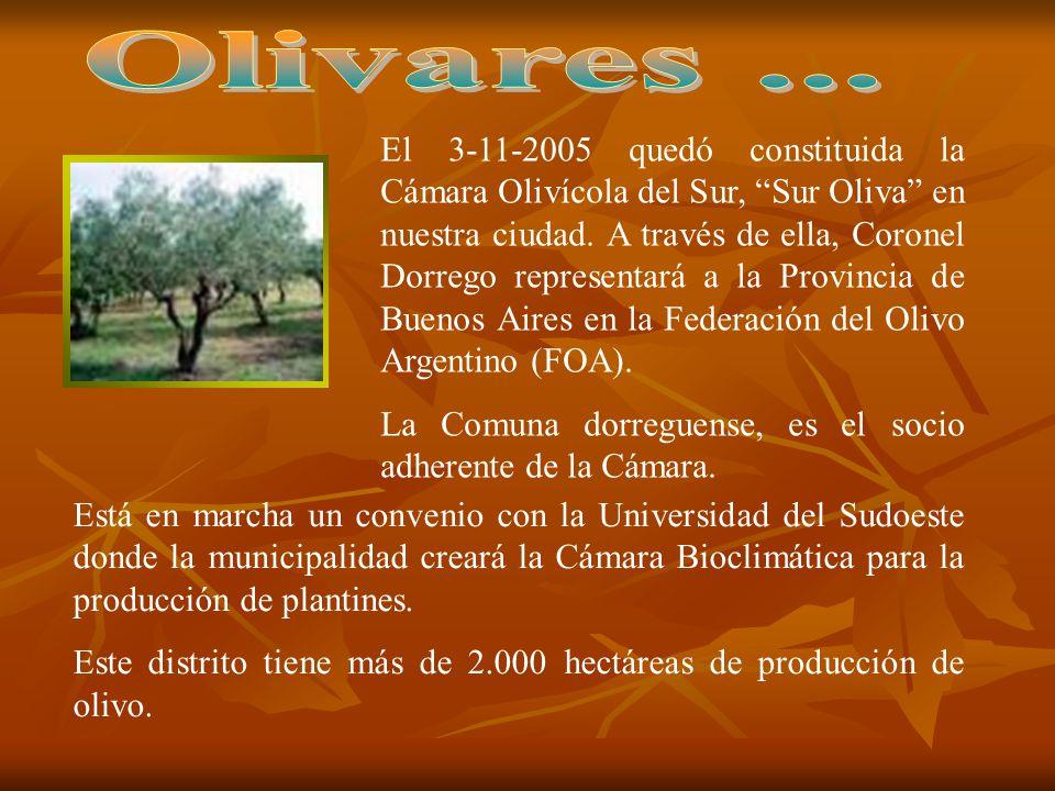El 3-11-2005 quedó constituida la Cámara Olivícola del Sur, Sur Oliva en nuestra ciudad. A través de ella, Coronel Dorrego representará a la Provincia