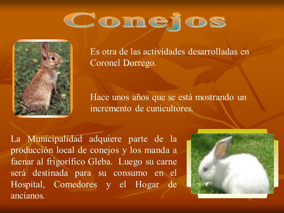 Es otra de las actividades desarrolladas en Coronel Dorrego.
