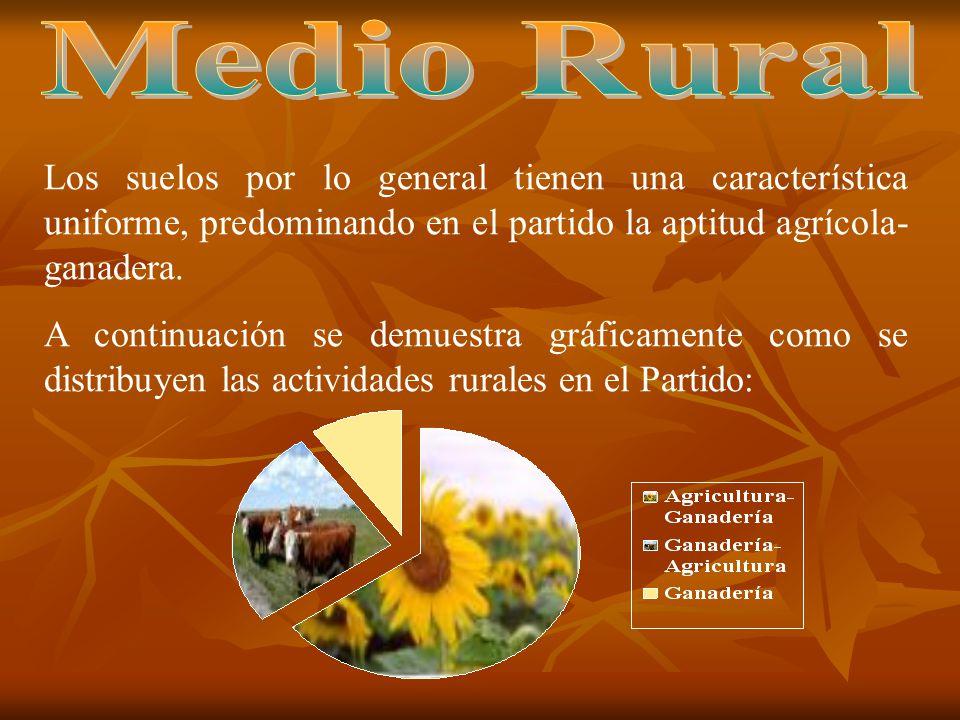 Se desprenden las siguientes consideraciones: El 88.47 % de la superficie del Partido se dedica a explotaciones agropecuarias.- Desde 1988, la superficie agrícola - ganadera se incrementó en un 5.03% (29.264 Has.).