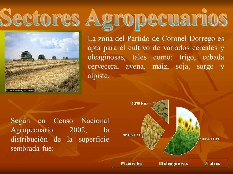 La zona del Partido de Coronel Dorrego es apta para el cultivo de variados cereales y oleaginosas, tales como: trigo, cebada cervecera, avena, maíz, soja, sorgo y alpiste.