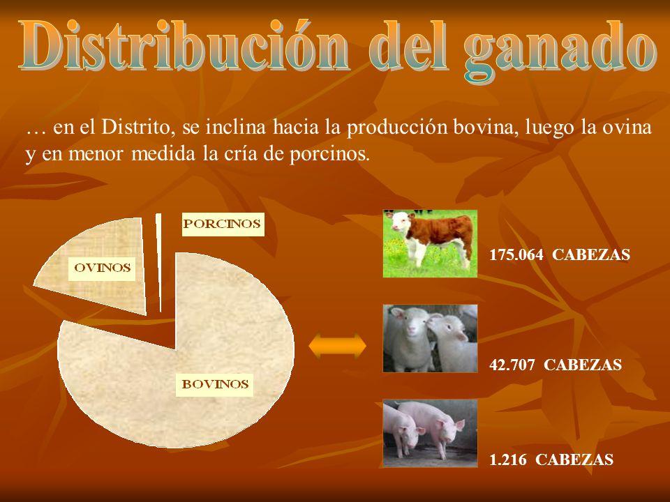 … en el Distrito, se inclina hacia la producción bovina, luego la ovina y en menor medida la cría de porcinos. 175.064 CABEZAS 42.707 CABEZAS 1.216 CA
