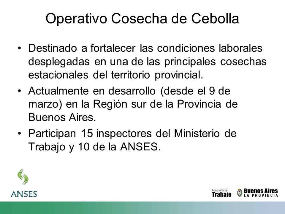 Operativo Cosecha de Cebolla Destinado a fortalecer las condiciones laborales desplegadas en una de las principales cosechas estacionales del territor