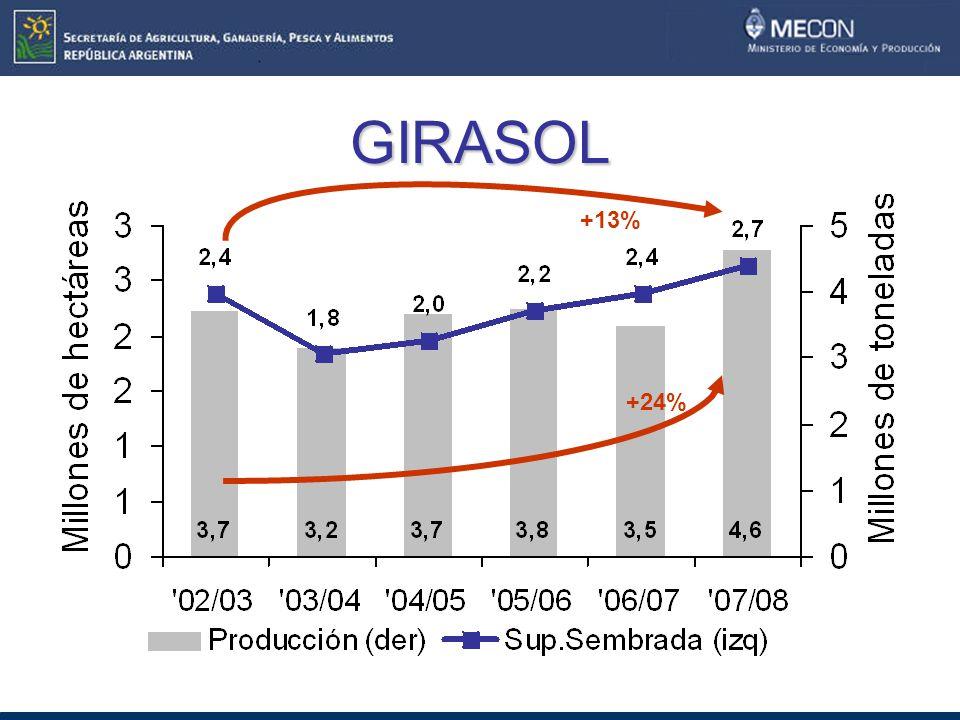 GIRASOL +24% +13%