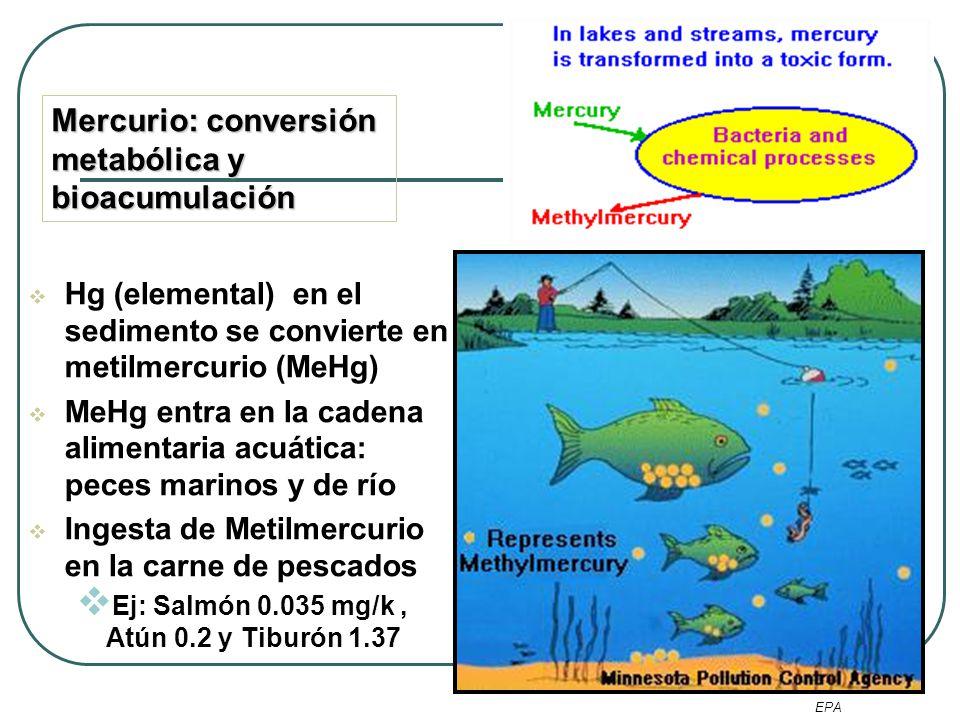 Mercurio: Descenso del umbral de peligro Desde 1972 cuando se define la neurotoxicidad del mercurio orgánico (Iraq) Recomendaciones EPA : 0,1 μg Hg/kg /día WHO : 1.6 µg/kg /semana Aparente umbral toxico en exposiciones mayores a 34 µg/kg/day.