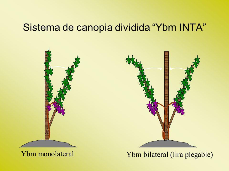 Sistema de canopia dividida Ybm INTA Ybm bilateral (lira plegable) Ybm monolateral