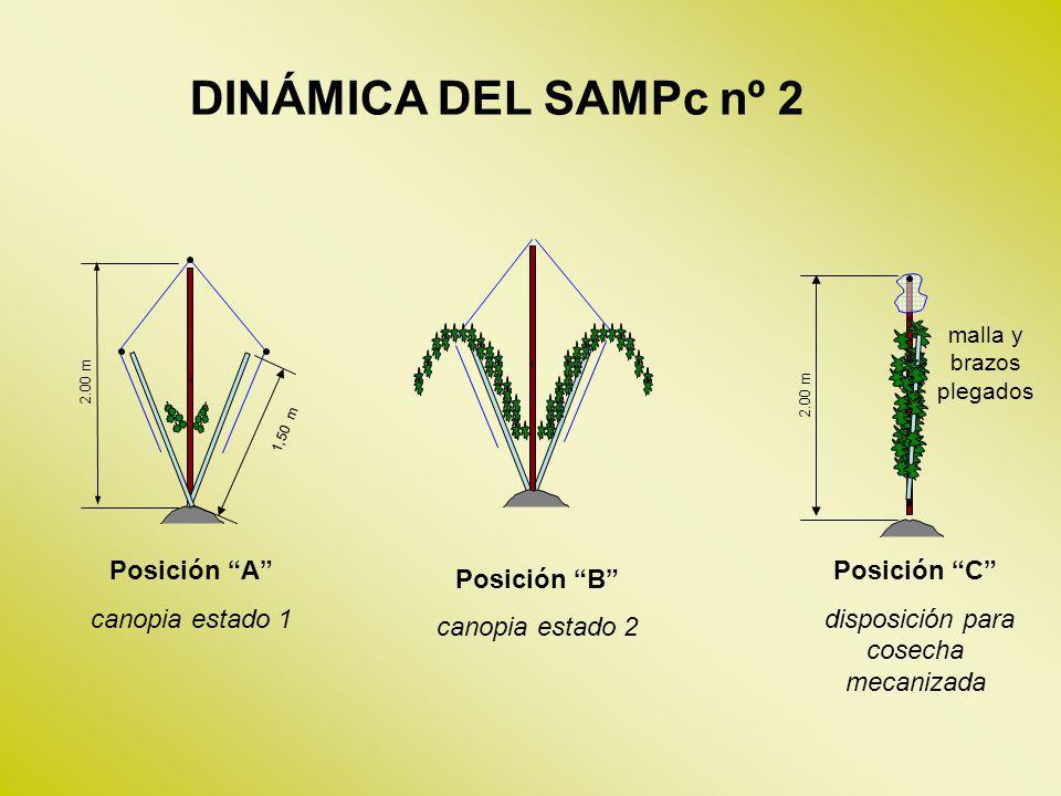 Posición A canopia estado 1 DINÁMICA DEL SAMPc nº 2 2.00 m 2.00 m 1,50 m Posición C disposición para cosecha mecanizada malla y brazos plegados Posici