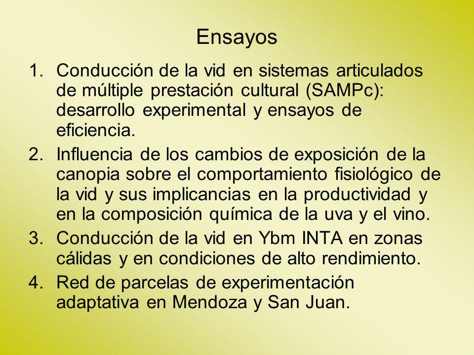 Ensayos 1.Conducción de la vid en sistemas articulados de múltiple prestación cultural (SAMPc): desarrollo experimental y ensayos de eficiencia. 2.Inf