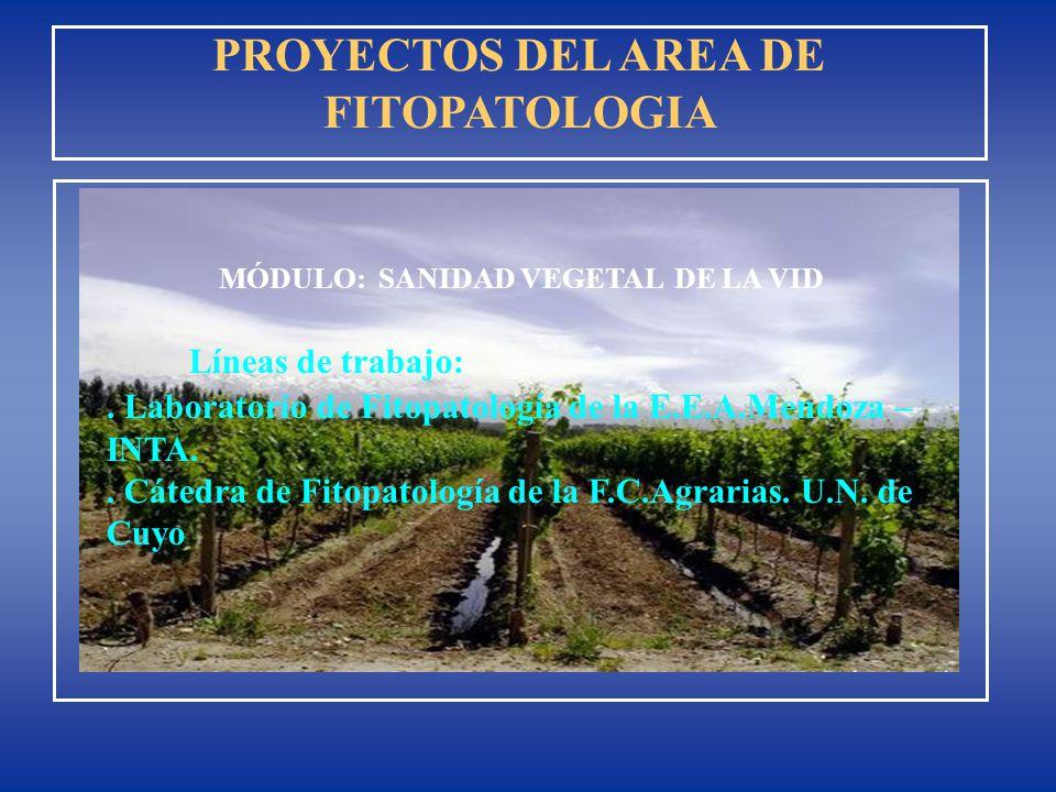 Líneas de trabajo:. Laboratorio de Fitopatología de la E.E.A.Mendoza – INTA.. Cátedra de Fitopatología de la F.C.Agrarias. U.N. de Cuyo PROYECTOS DEL