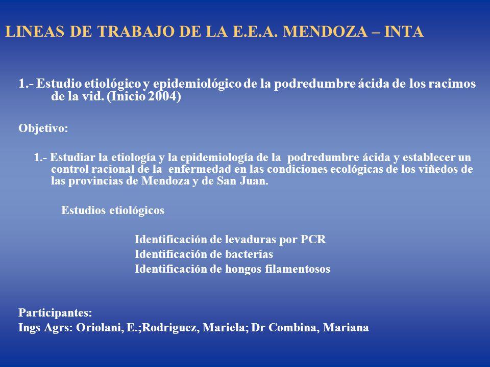 LINEAS DE TRABAJO DE LA E.E.A. MENDOZA – INTA 1.- Estudio etiológico y epidemiológico de la podredumbre ácida de los racimos de la vid. (Inicio 2004)