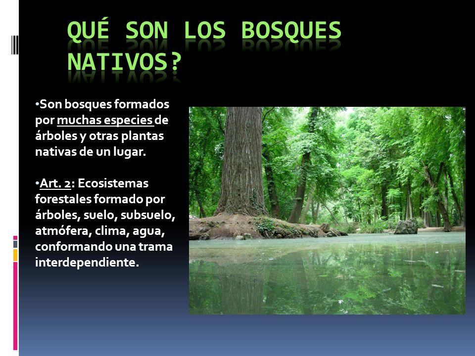 Son bosques formados por muchas especies de árboles y otras plantas nativas de un lugar. Art. 2: Ecosistemas forestales formado por árboles, suelo, su