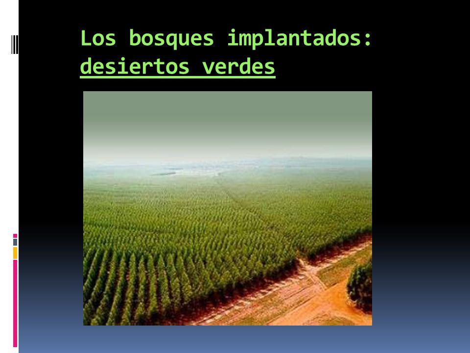 Los bosques implantados: desiertos verdes
