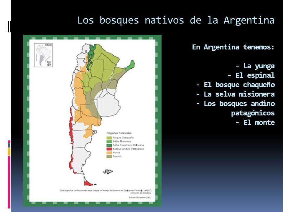 Los bosques nativos de la Argentina En Argentina tenemos: - La yunga - El espinal - El bosque chaqueño - La selva misionera - Los bosques andino patag