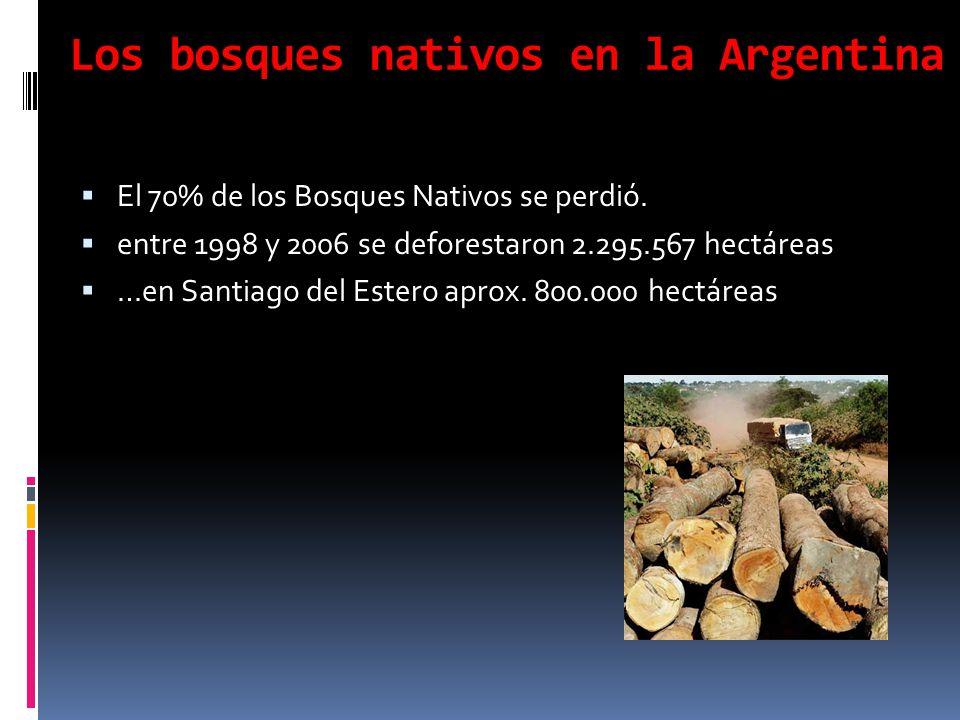 Los bosques nativos en la Argentina El 70% de los Bosques Nativos se perdió. entre 1998 y 2006 se deforestaron 2.295.567 hectáreas …en Santiago del Es