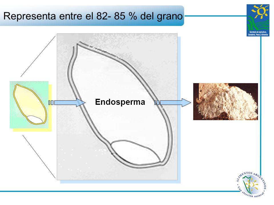 Endosperma Representa entre el 82- 85 % del grano
