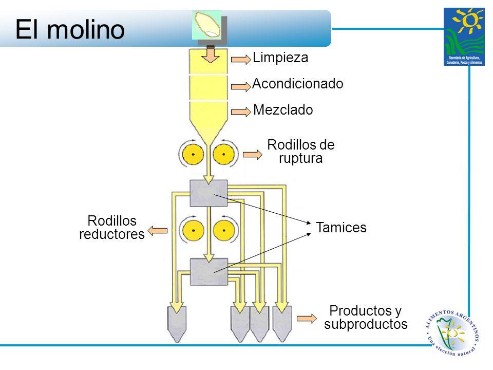 El molino Limpieza Acondicionado Mezclado Rodillos de ruptura Rodillos reductores Tamices Productos y subproductos
