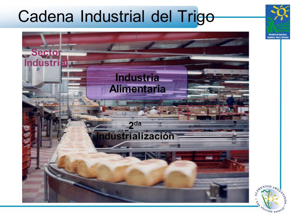 Cadena Industrial del Trigo Sector Industrial Industria Alimentaria 2 da Industrialización