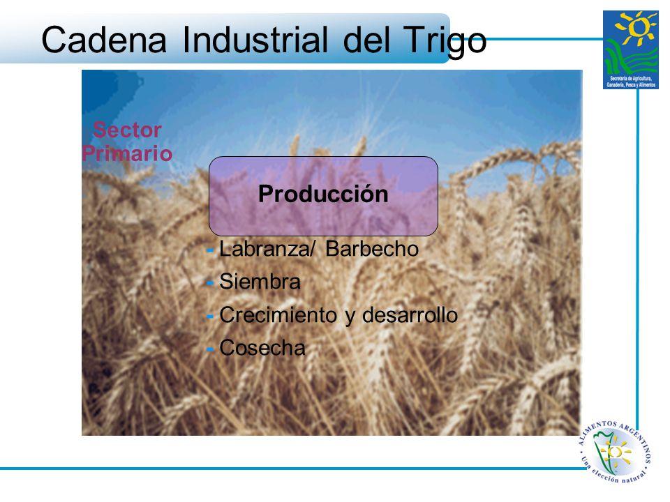 Cadena Industrial del Trigo Producción - Labranza/ Barbecho - Siembra - Crecimiento y desarrollo - Cosecha Sector Primario