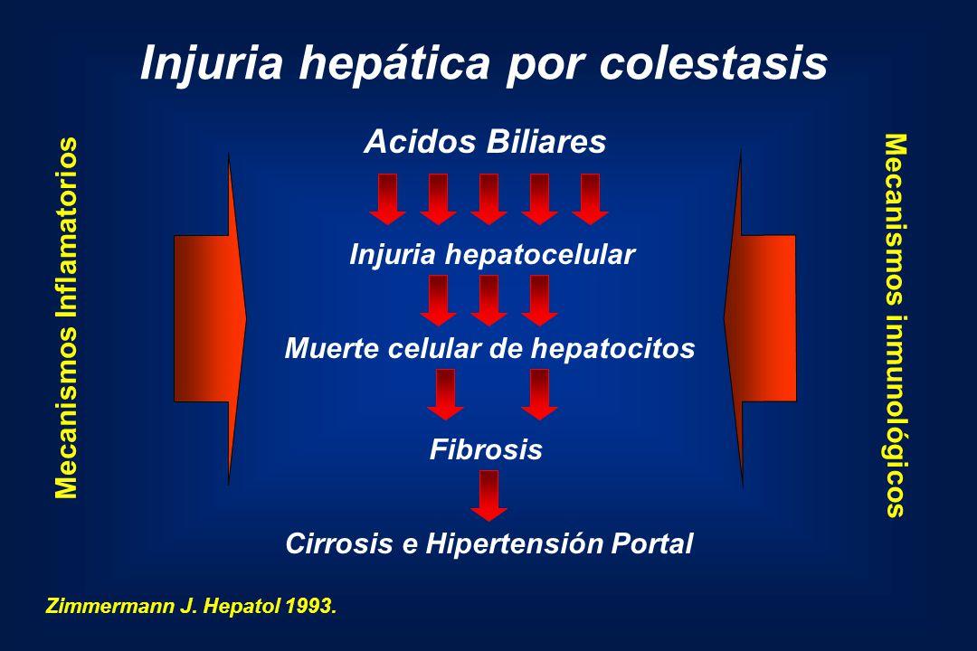 Injuria hepática por colestasis Acidos Biliares Injuria hepatocelular Muerte celular de hepatocitos Fibrosis Cirrosis e Hipertensión Portal Zimmermann