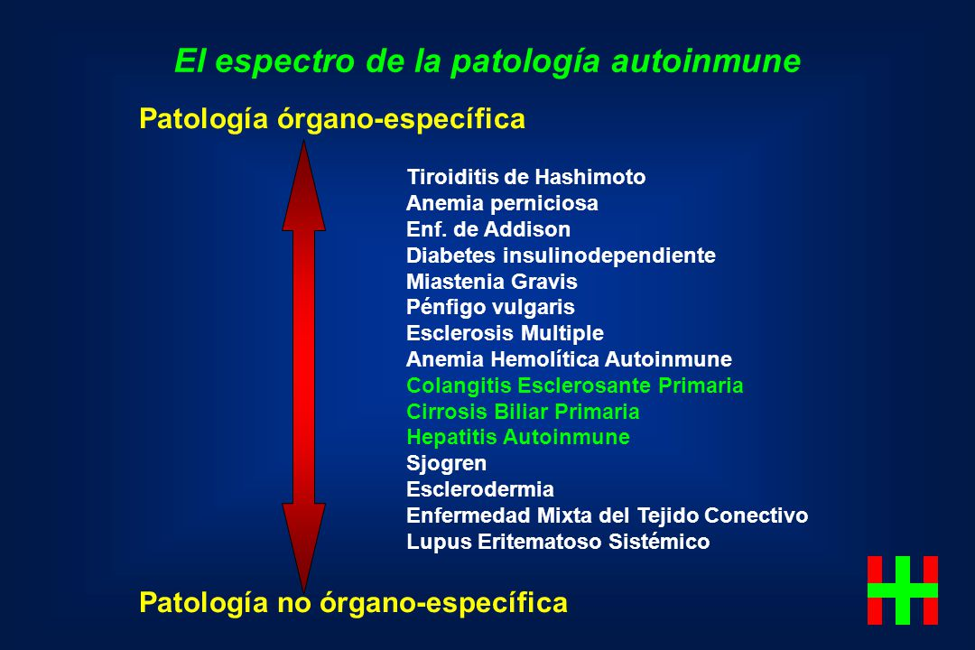 El espectro de la patología autoinmune Patología órgano-específica Patología no órgano-específica Tiroiditis de Hashimoto Anemia perniciosa Enf. de Ad