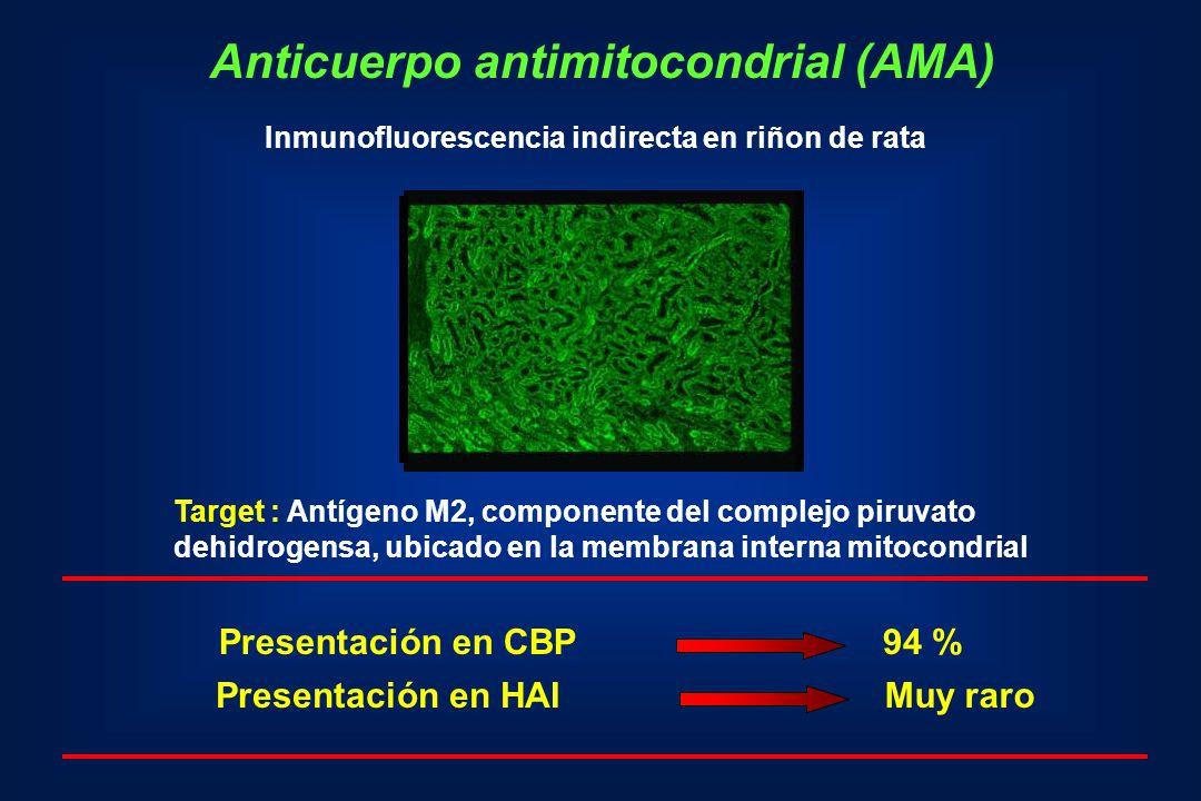 Anticuerpo antimitocondrial (AMA) Inmunofluorescencia indirecta en riñon de rata Presentación en CBP94 % Muy raro Target : Antígeno M2, componente del