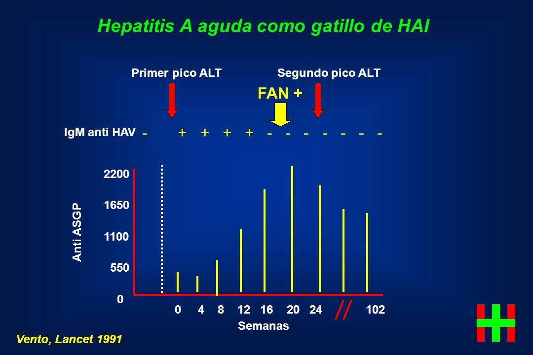 Hepatitis A aguda como gatillo de HAI 0 4 8 12 16 20 24 102 Semanas 2200 1650 1100 550 0 Anti ASGP Vento, Lancet 1991 IgM anti HAV - + + + + - - - - -