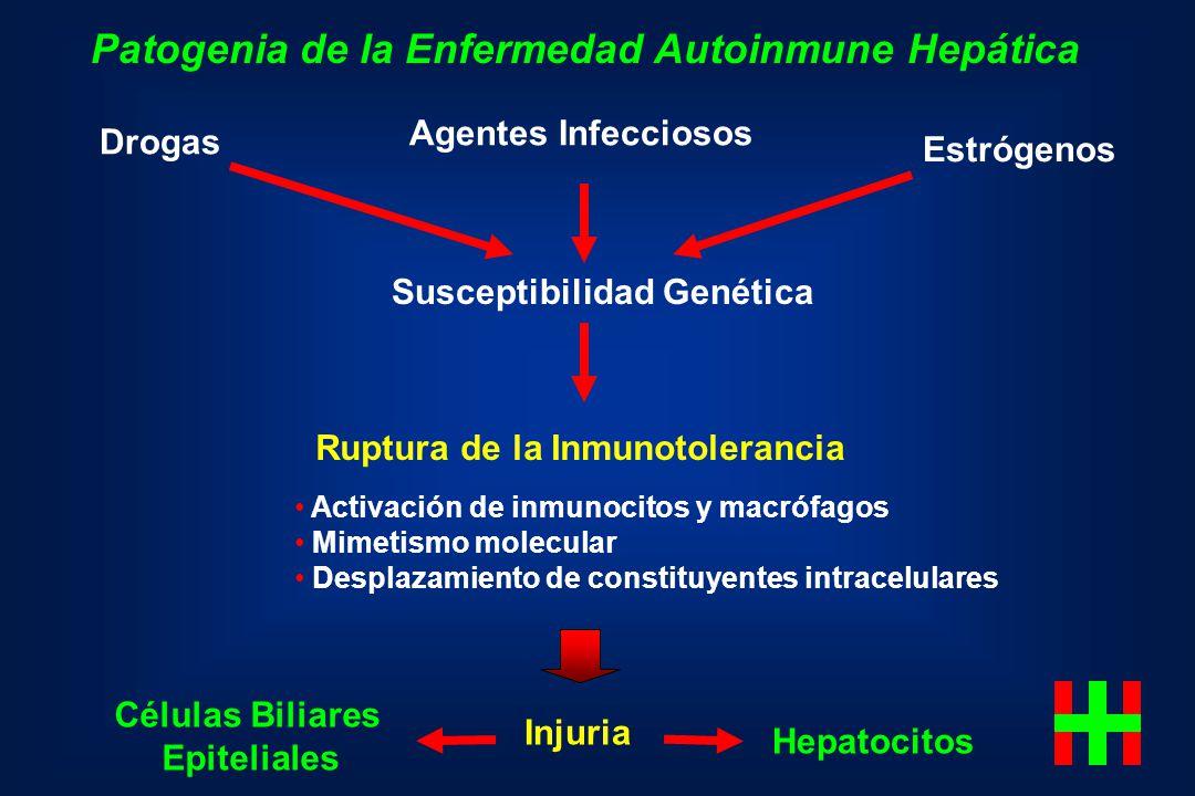 Patogenia de la Enfermedad Autoinmune Hepática Agentes Infecciosos Estrógenos Drogas Susceptibilidad Genética Injuria Hepatocitos Activación de inmuno