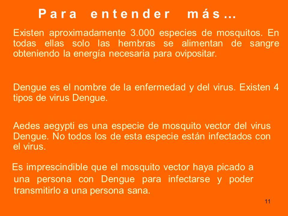 10 ADULTO DE Aedes aegypti Observación con lupa binocular de mosquito adulto que se desarrolló en el frasco.