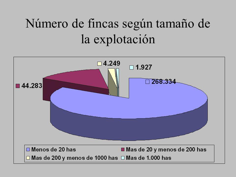 Número de fincas según tamaño de la explotación