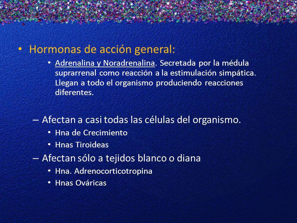 Hormonas de acción general: Adrenalina y Noradrenalina. Secretada por la médula suprarrenal como reacción a la estimulación simpática. Llegan a todo e