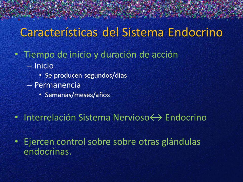 Características del Sistema Endocrino Tiempo de inicio y duración de acción – Inicio Se producen segundos/días – Permanencia Semanas/meses/años Interr