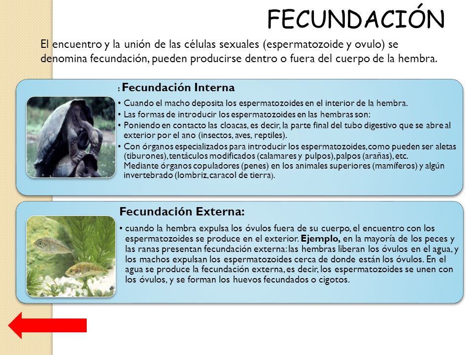 Reproducción Animal - ppt descargar