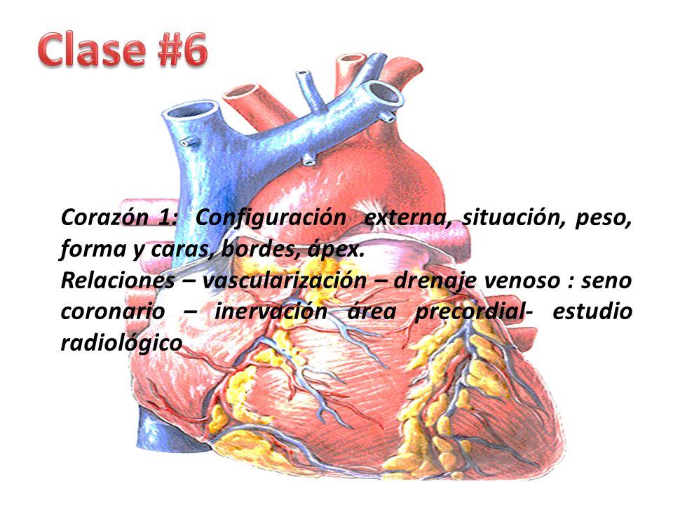 Atractivo Anatomía Venosa Coronaria Composición - Imágenes de ...