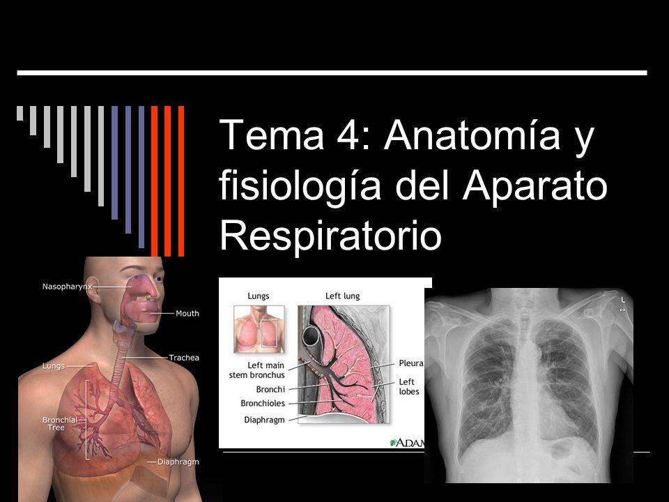Fantástico Temas De Papel De Anatomía Y Fisiología Colección de ...