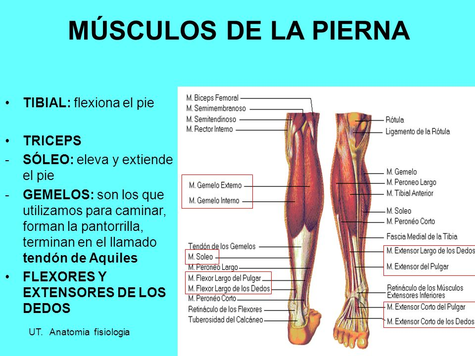 Único Pierna Ligamentos Anatomía Fotos - Imágenes de Anatomía Humana ...