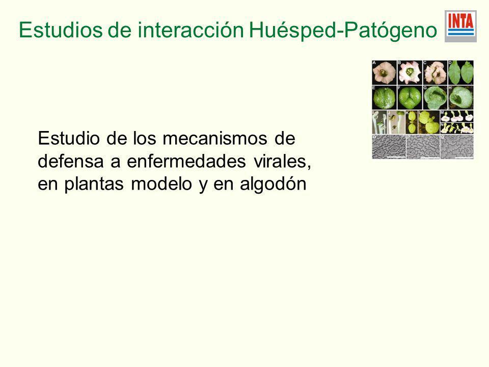 Estudio de los mecanismos de defensa a enfermedades virales, en plantas modelo y en algodón Estudios de interacción Huésped-Patógeno