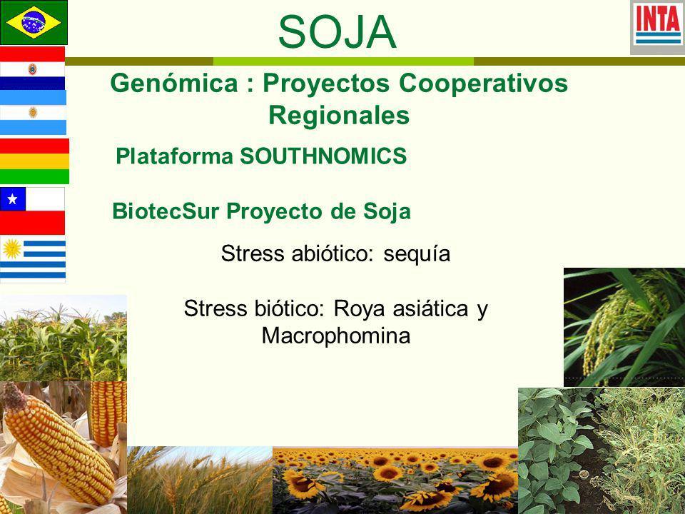 SOJA Genómica : Proyectos Cooperativos Regionales Plataforma SOUTHNOMICS BiotecSur Proyecto de Soja Stress abiótico: sequía Stress biótico: Roya asiática y Macrophomina