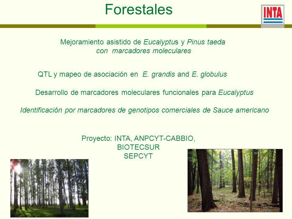 Forestales Mejoramiento asistido de Eucalyptus y Pinus taeda con marcadores moleculares QTL y mapeo de asociación en E.