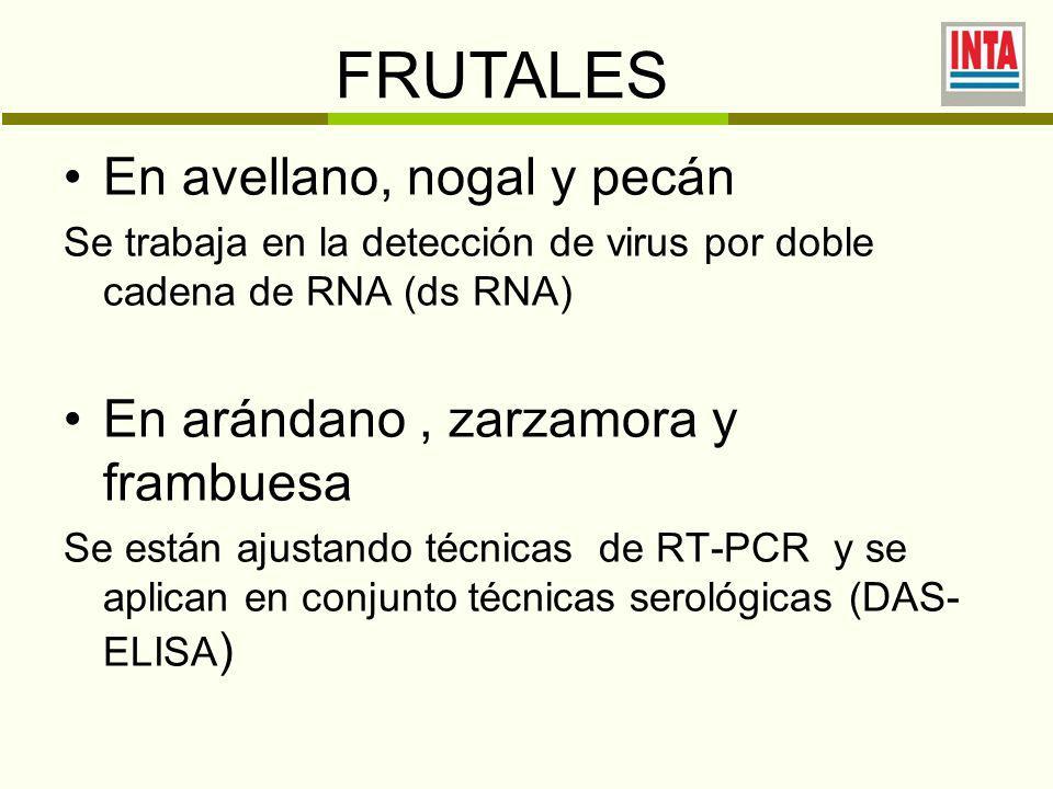 En avellano, nogal y pecán Se trabaja en la detección de virus por doble cadena de RNA (ds RNA) En arándano, zarzamora y frambuesa Se están ajustando técnicas de RT-PCR y se aplican en conjunto técnicas serológicas (DAS- ELISA ) FRUTALES