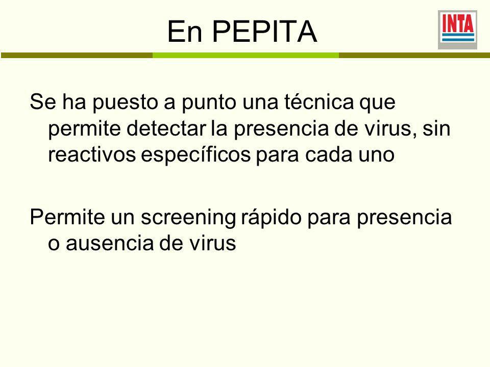 En PEPITA Se ha puesto a punto una técnica que permite detectar la presencia de virus, sin reactivos específicos para cada uno Permite un screening rápido para presencia o ausencia de virus