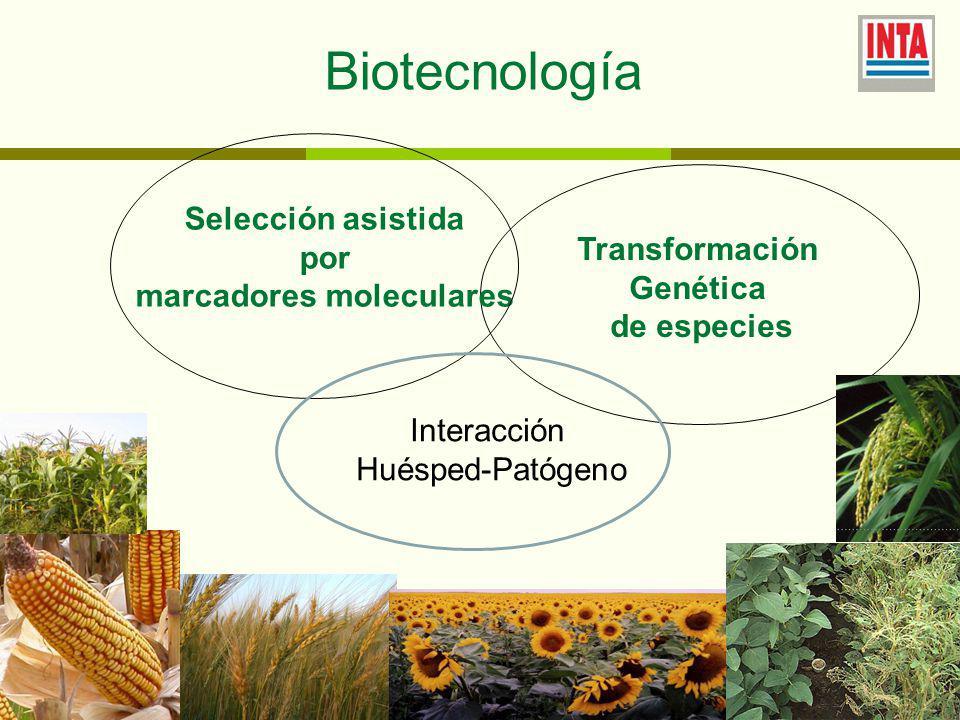 Selección asistida por marcadores moleculares Biotecnología Transformación Genética de especies Interacción Huésped-Patógeno