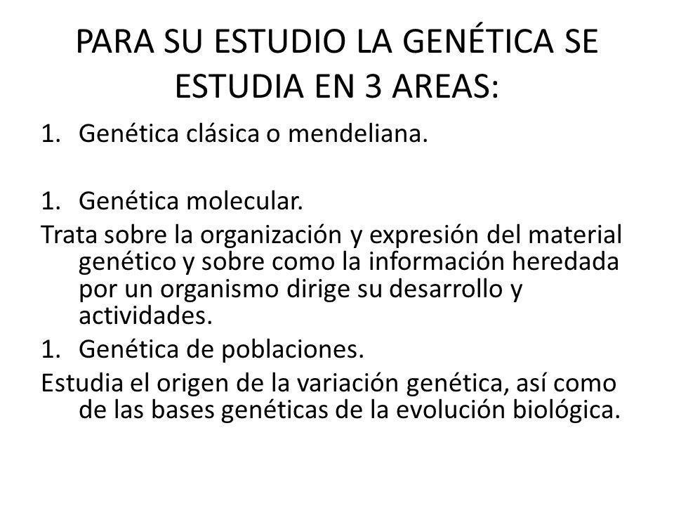 PARA SU ESTUDIO LA GENÉTICA SE ESTUDIA EN 3 AREAS: 1.Genética clásica o mendeliana.