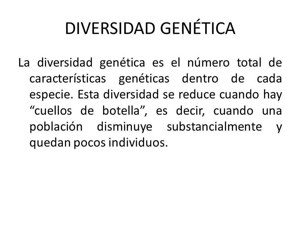 DIVERSIDAD GENÉTICA La diversidad genética es el número total de características genéticas dentro de cada especie.
