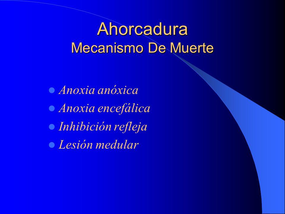 Ahorcadura Mecanismo De Muerte Anoxia anóxica Anoxia encefálica Inhibición refleja Lesión medular