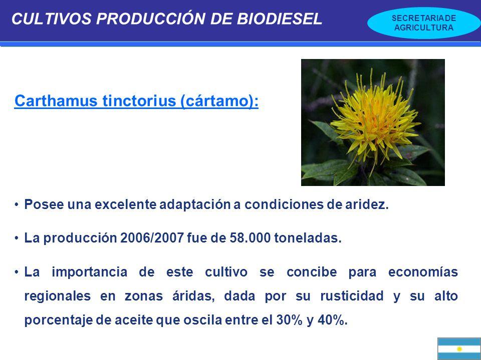SECRETARIA DE AGRICULTURA CULTIVOS PRODUCCIÓN DE BIODIESEL Ricinus communis (ricino, tártago, mamona) Especie rústica de gran plasticidad fenotípica, que posee un alto porcentaje de aceite (45%), de fácil extracción.