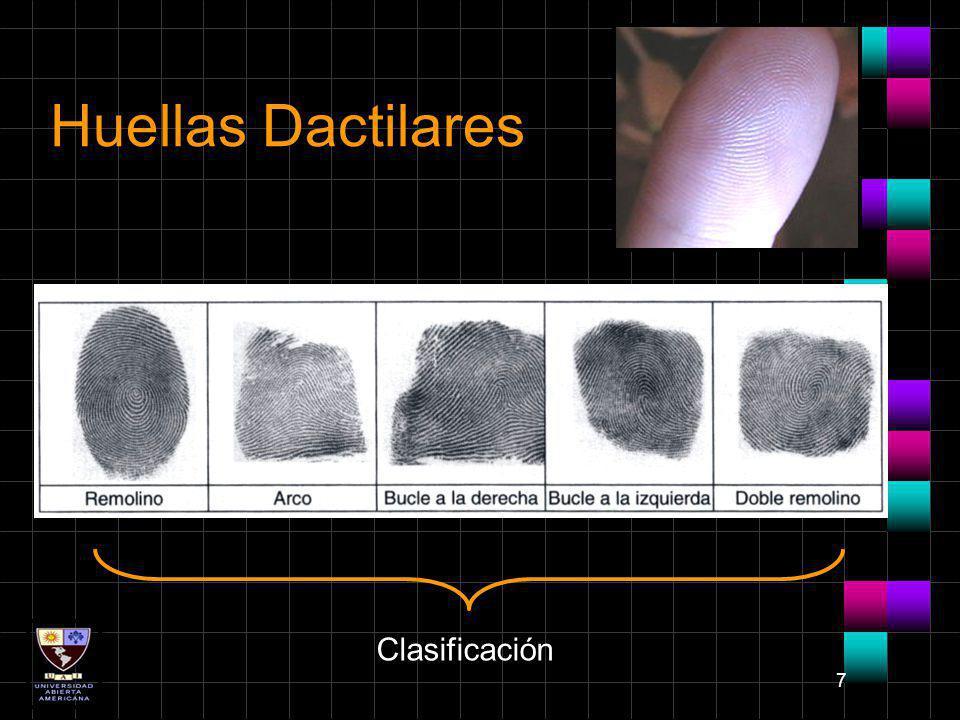 7 Huellas Dactilares Clasificación