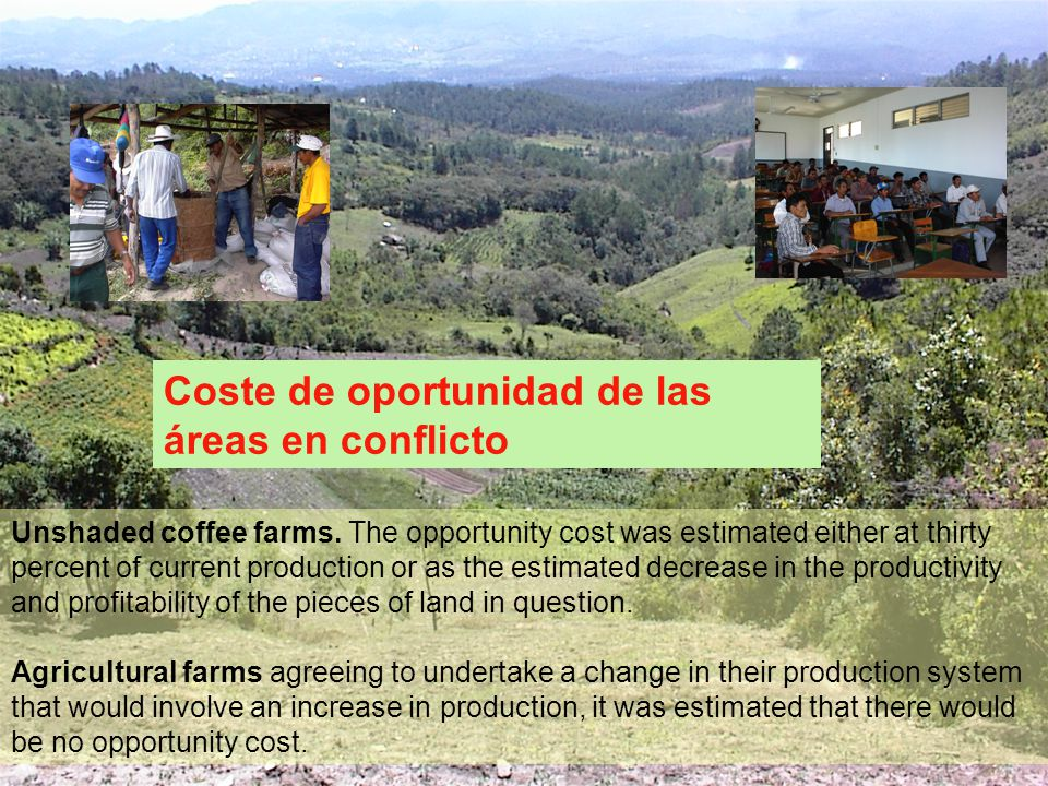 Unshaded coffee farms. The opportunity cost was estimated either at thirty percent of current production or as the estimated decrease in the productiv