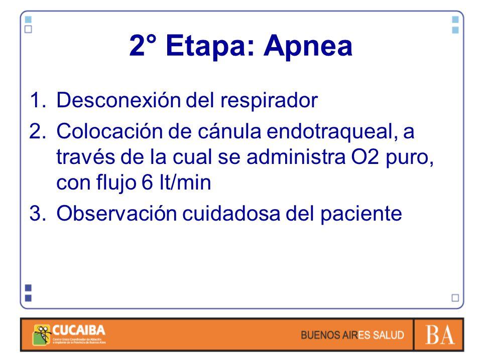 2° Etapa: Apnea 1.Desconexión del respirador 2.Colocación de cánula endotraqueal, a través de la cual se administra O2 puro, con flujo 6 lt/min 3.Observación cuidadosa del paciente