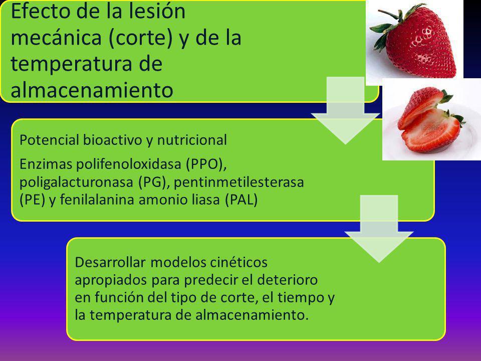 Efecto de la lesión mecánica (corte) y de la temperatura de almacenamiento Potencial bioactivo y nutricional Enzimas polifenoloxidasa (PPO), poligalacturonasa (PG), pentinmetilesterasa (PE) y fenilalanina amonio liasa (PAL) Desarrollar modelos cinéticos apropiados para predecir el deterioro en función del tipo de corte, el tiempo y la temperatura de almacenamiento.